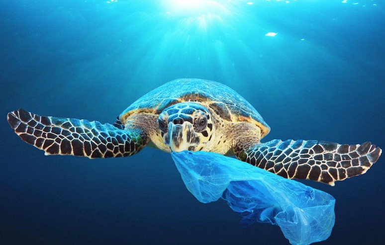 使い捨てプラスチックゴミ袋 カメのエサであるクラゲと疑似